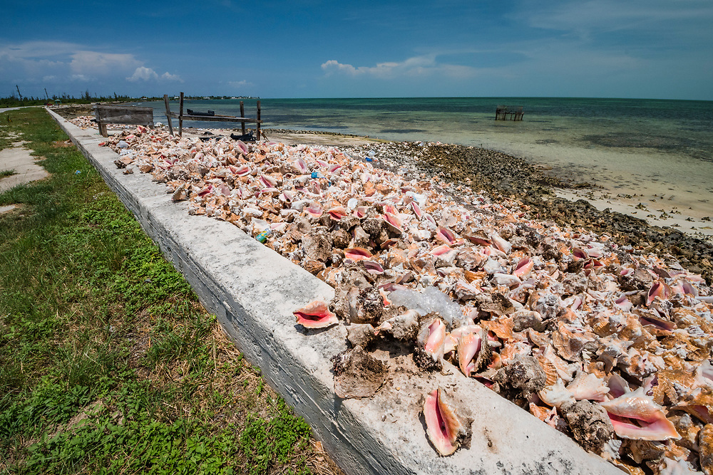 A large pile of conch shells, called a midden, along the road in West End, Grand Bahama. The shells can be used as a natural breakwater for storms.