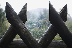Spider web between two fence posts with nature in the background, Bavaria, Germany