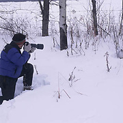 Wildlife Photography, Photographer Daniel J. Cox, photographing snowshoe hare in Canada.