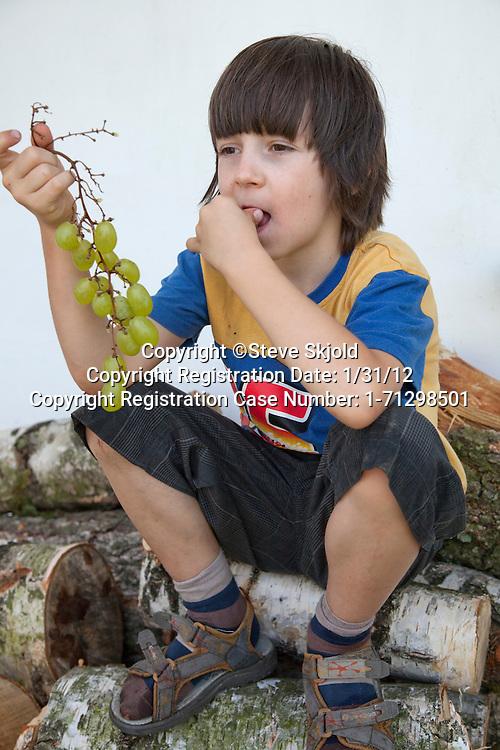 Polish boy age 8 sitting on woodpile eating green grapes. Zawady Central Poland