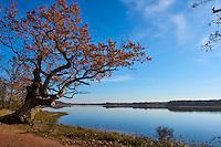 France, Indre (36), le Berry, parc naturel régional de la Brenne, Rosnay, Etang de la Mer Rouge // France, Indre (36), le Berry, Brenne, natural park, Etang de la Mer Rouge