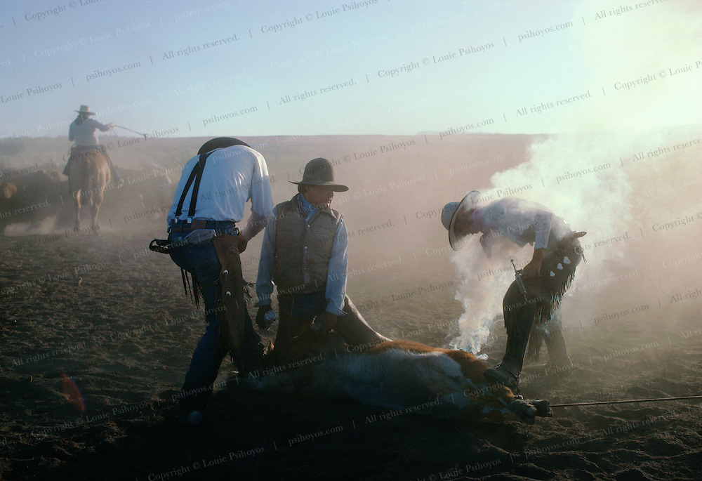 TJ Thompson, cow hand for the T Lazy S Ranch branding cattle.
