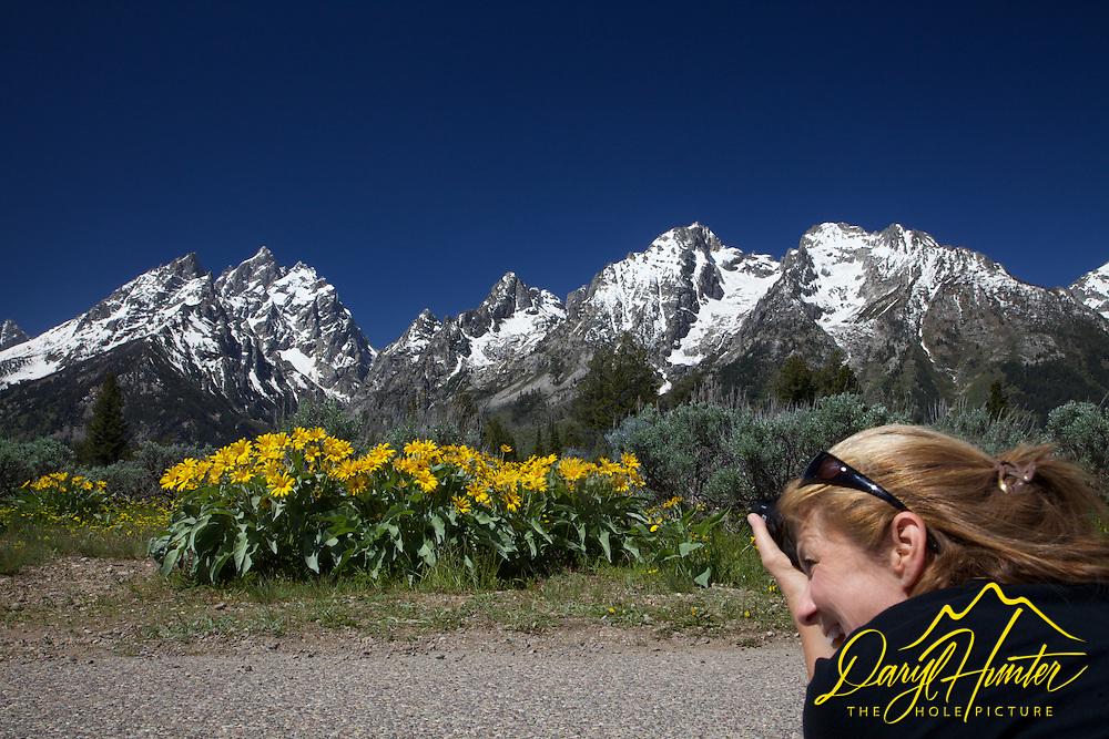 Balsomroot wildflowers, photographer, Grand Tetons, Grand  Teton National Park
