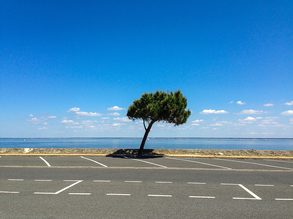 Leaning tree, port of Arcachon, France, 2013