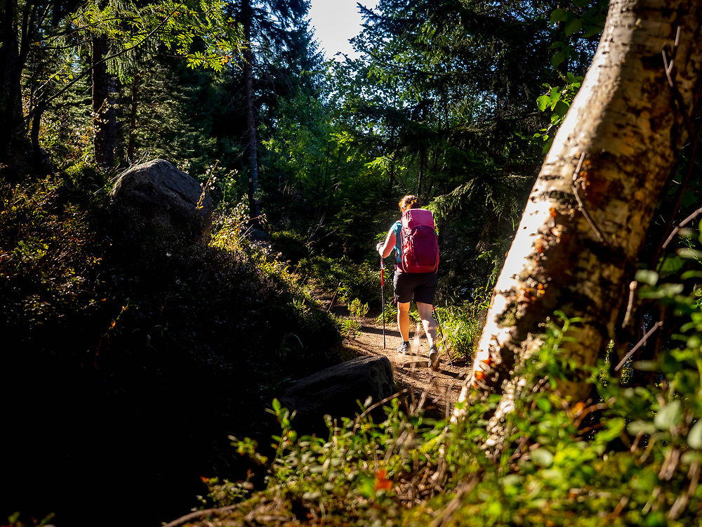 Rear view of women hiking in forest woods at Lac Blanc, Vosges, France