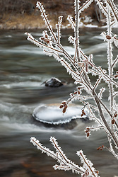 """""""Frost at the Truckee River"""" - This frost covered branch was photographed along the Truckee River."""