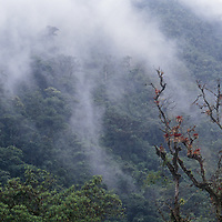 Fog hangs above a cloud forest in the upper Amazon Basin.