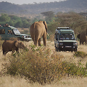 Waiting for the elephants to pass in Samburu. Kenya