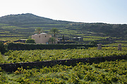 Terraced vineyards and a winery on the island of Pantelleria, Sicily, Italy.
