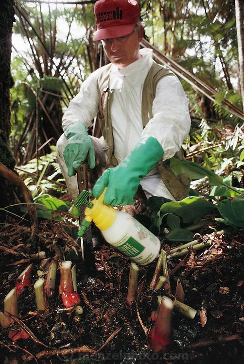 "Rainforest ""weedbuster"" Bob Mattos chopping & applying herbicide to invasive weeds; Kahili Ginger. Volcano National Park Big Island, Hawaii. USA. MODEL RELEASED."