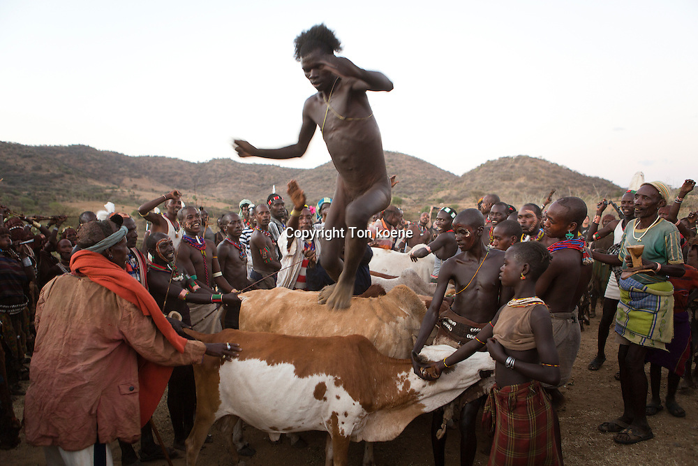 cow jumping by the Hamer tribe