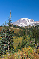View of Mount Rainier from Paradise Valley in Mount Rainier National Park, Washington State, USA