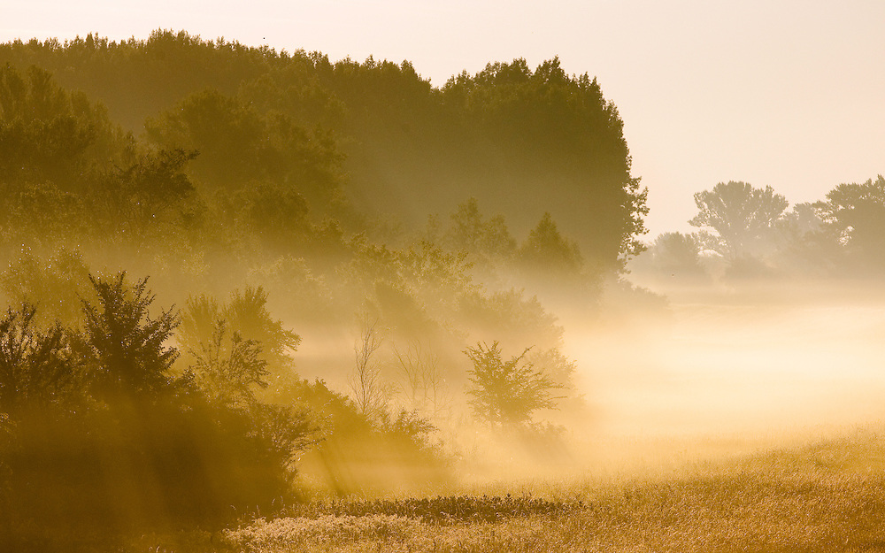 Hard wood flood plain forest along river Danube in early morning scenery, Gornje Podunavlje Special Nature Reserve, Serbia