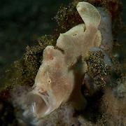 Dive Spot: Jahir
