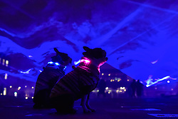 """© Licensed to London News Pictures. 17/01/2018. LONDON, UK. (L to R) Henry and Bess, a pair of Boston terriers are seen amongst """"Waterlicht"""" by Daan Roosegaarde in Granary Square, Kings Cross.  Preview of Lumiere London, the capital's largest arts festival commissioned by The Mayor of London and produced by Artichoke.  Light installations by leading artists have been set up, both north and south of the river for the public to view 18-21 January.   Photo credit: Stephen Chung/LNP"""