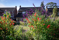 General view of the garden with Salvia splendens in the foreground