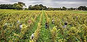 Dutch Wine Colonjes Groesbeek