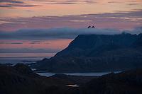 Twin peaks of Solbjørntind rise over clouds, Moskenesøy, Lofoten Islands, Norway