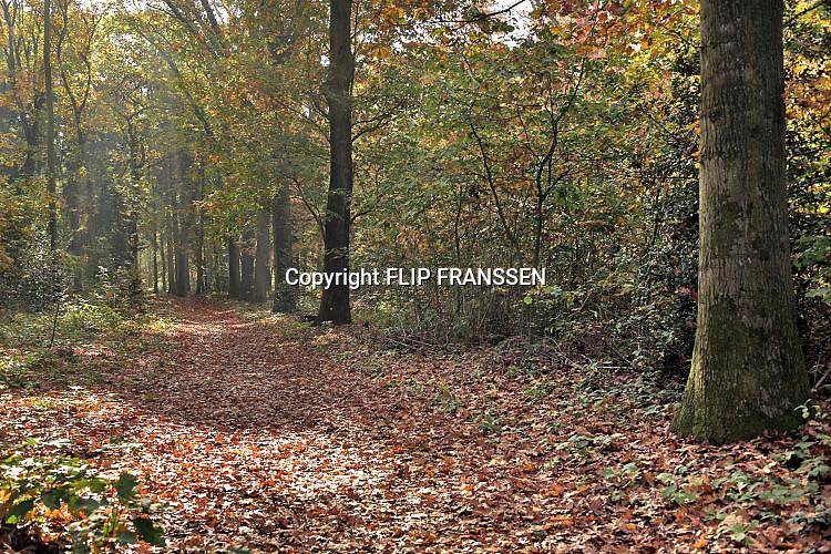 Nederland, Ubbergen, 18-10-2017 Mooi herfstweer zorgt voor gele en oranje kleuren in het bos. Foto: Flip Franssen
