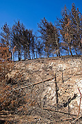Israel, Galilee, Fire damages to the fields and forests in northern Israel. The fires were caused by the Katyusha rockets fired by Hezbollah during the second Lebanon war, August 2006,