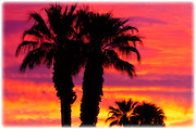 Silhouetted palms against clouds at sunrise, Anza-Borrego Desert State Park, California USA