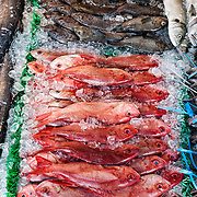 Fresh red snapper for sale at the Maine Avenue Fish Market in Washington DC