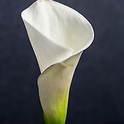 """The Calla Lily Series<br /> <br /> *For all details about sizes, paper and pricing starting at $85, click """"Add to Cart"""" below."""
