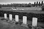 Esquelmes, Belgium, 28 may 2017, Esquelmes war cemetery. British soldiers who have prevented German army to cross the river Scheldt  (out of the series from ongoing project about scheldt and meuse)