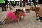 """20180908/ Nicolas Celaya - adhocFOTOS/ URUGUAY/ MONTEVIDEO/ PARQUE BATLLE/ Primera edición de """"Pet Run"""", en el Parque Batlle, Montevideo.<br /> En la foto: Primera edición de """"Pet Run"""", en el Parque Batlle, Montevideo. Foto: Nicolás Celaya /adhocFOTOS"""