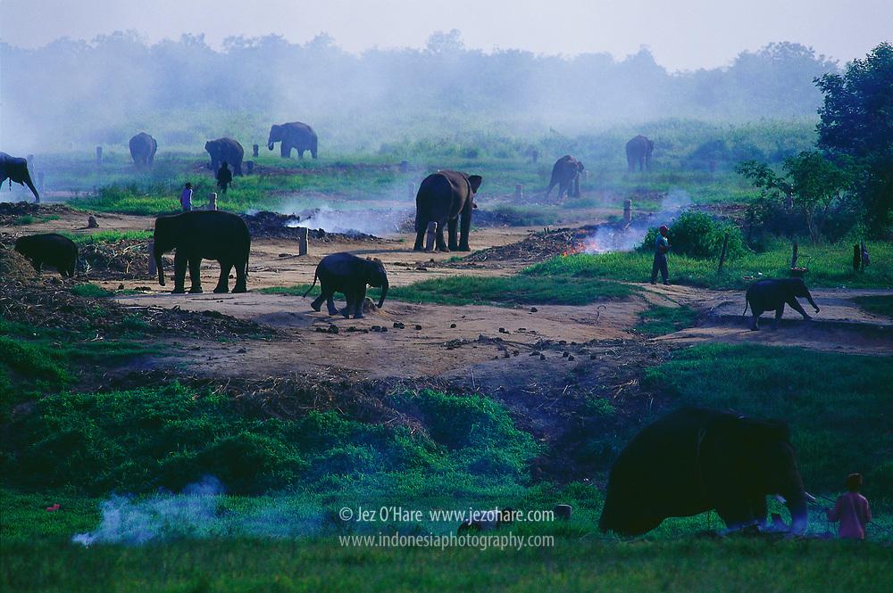 Elephant training camp, Way Kambas National Park,  Lampung, Sumatra, Indonesia.