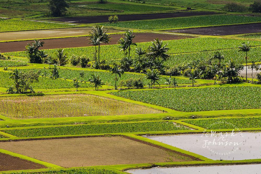 Taro fields, Hanalei, Kauai, Hawaii