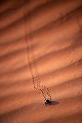 NAMIBIA SOSSUSVLEI 21APR14 - General view of a beetle on a sand dune in the Sossusvlei in the Namib Desert, Namibia.<br /> <br /> Sossusvlei is a salt and clay pan surrounded by high red dunes, located in the southern part of the Namib Desert, in the Namib-Naukluft National Park, which is one of the major visitor attractions of Namibia.<br /> <br /> jre/Photo by Jiri Rezac<br /> <br /> © Jiri Rezac 2014