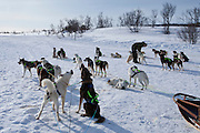 Alaskan Huskies harnessed for dog-sledding at Villmarkssenter wilderness centre Kvaloya Island, Tromso, Arctic Circle Northern Norway