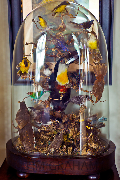 Stuffed toucan and other birds in drawing room of The Old Quay House Hotel in Clifden, Connemara, County Galway