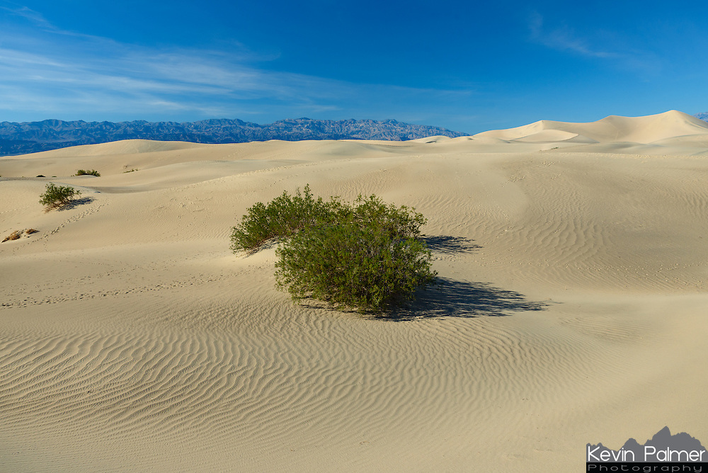 The Mesquite Sand Dunes are located near Stovepipe Wells in Death Valley.