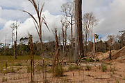 Deforested landscape and old gold extraction zone in the middle of the mining corridor in the Peruvian Amazon. San Jose de Kareme, Peru.