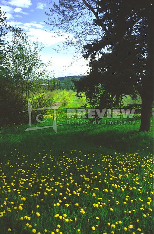 Campos de Cima da Serra, localizado perto dos Canions dos Aparados da Serra, no Rio Grande do Sul.FOTO: Jefferson Bernardes/Preview.com