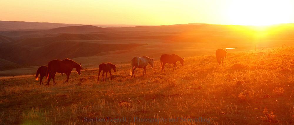 Horses, Heart Butte Road, Blackfeet Reservation Montana