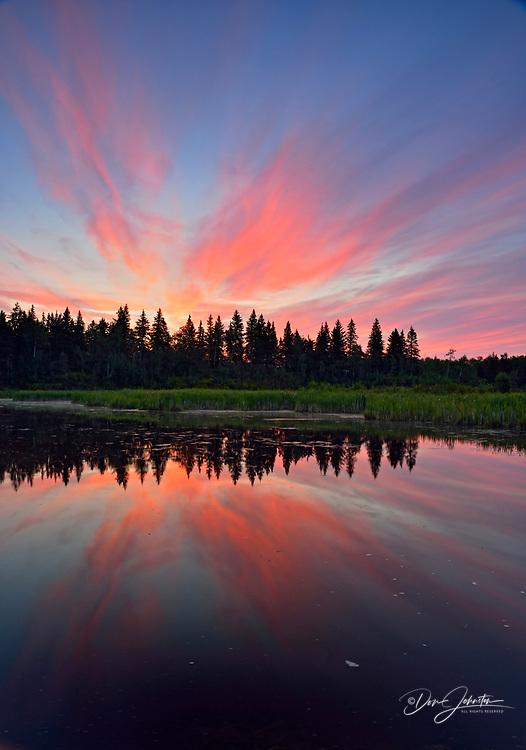 Beaver pond at dawn, Elk Island National Park, Alberta, Canada