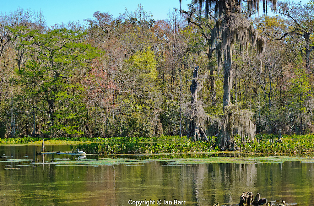 Another sunny day at Wakulla Springs State Park, Florida, Florida, USA.