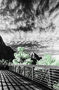 Bridge, selectively colored black and white infared, Zion National Park, Utah, USA