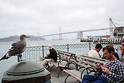 Het havengebouw van San Francisco is een terminal voor veerboten en een winkelcentrum. Het gebouw is in 1898 gebouwd. De Amerikaanse stad San Francisco aan de westkust is een van de grootste steden in Amerika en kenmerkt zich door de steile heuvels in de stad.<br /> <br /> The Ferry Building of San Francisco is a terminal and a shopping mall. The building was established in 1898. The US city of San Francisco on the west coast is one of the largest cities in America and is characterized by the steep hills in the city.