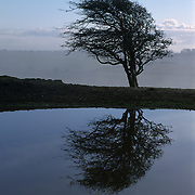 landscape of silhouetted tree and its symmetrical reflection from a lake
