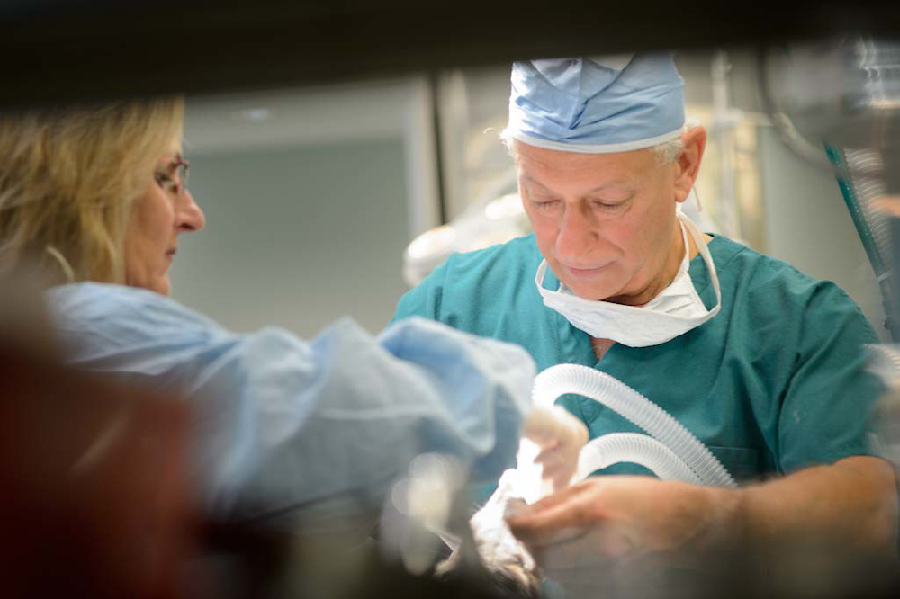 Dr Rex Sentell wrapping up a procedure on an animal at the Palm City Animal Medical Center