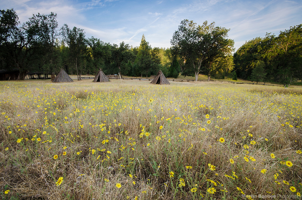 Summer wildflowers, Indian Grinding Rock State Historic Park, Amador County, California
