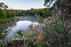 Indian paintbrush and other wildflowers on McCommas Bluff above Trinity River, Great Trinity Forest, Dallas, Texas, USA