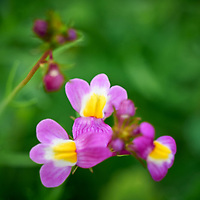20210601-flowers