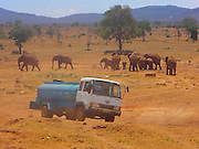 """In a land as parched as Kenya's Tsavo West National Park, no visitor arrives with more fanfare than the water man.<br /> <br /> That would be Patrick Kilonzo Mwalua. And when he rumbles down the dusty road bearing some 3,000 gallons of fresh water, the elephants, buffalo, antelope and zebras come running.<br /> <br /> They've come to know the water man by the rumble of his engine. And his lifesaving cargo. """"There is completely no water, so the animals are depending on humans,"""" Mwalua said,. """"If we don't help them, they will die."""" Mwalua fills the bone-dry watering holes in the region, driving for hours on end every day to haul water to where it's most desperately needed.<br /> <br /> The holes themselves, lined with concrete, often need cleaning — Mwalua blames it on buffalo droppings — and sometimes, he will just hose down an area of cracked earth for the grateful animals.<br /> <br /> """"The buffalo roll in the mud so they suffocate the fleas and ticks,"""" he says. Many animals don't even wait that long, fearlessly crowding the truck as Mwalua cranks the tap.<br /> <br /> """"Last night, I found 500 buffalo waiting at the water hole,"""" he says. """"When I arrived they could smell the water. The buffalo were so keen and coming close to us.<br /> <br /> """"They started drinking water while I was standing there. They get so excited."""" Mwalua, who is a pea farmer in his local village, came up with the idea after seeing firsthand the grim toll climate change has taken in his native land. In the last year especially, he says, the area has seen precious little precipitation, leaving animals to die of thirst in these cracked lands.<br /> <br /> """"We aren't really receiving rain the way we used to,"""" he says. """"From last year, from June, there was no rain completely. So I started giving animals water because I thought, 'If I don't do that, they will die.'"""" Between road trips, Mwalua runs a conservation project called Tsavo Volunteers. The 41-year-old also visits local schools to talk to ch"""