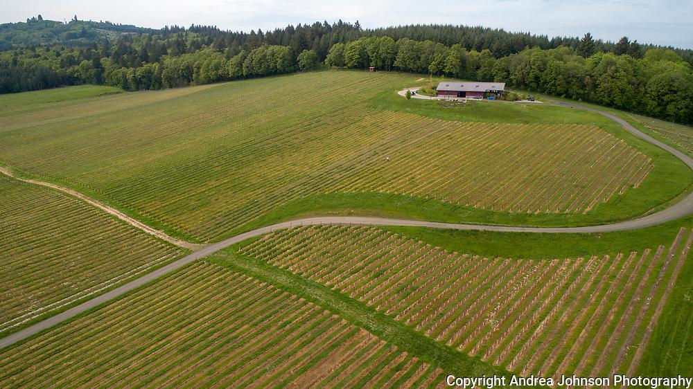 Illahe Vineyards, Willamette Valley, Oregon