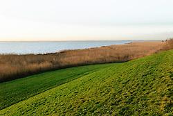 Oostvaardersplassen, Lelystad, Flevoland